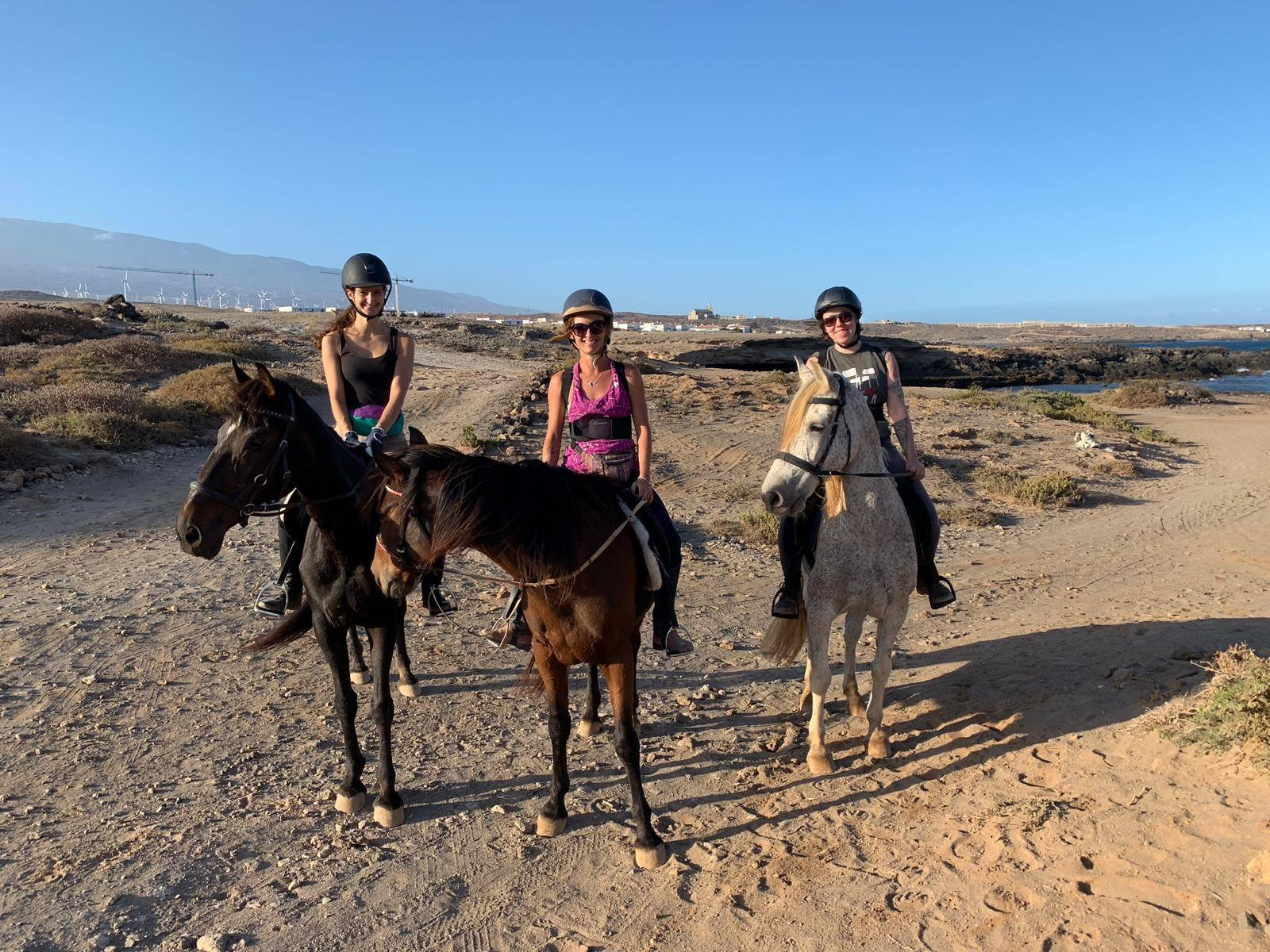 Horse sanctuary rescue horses on the beach