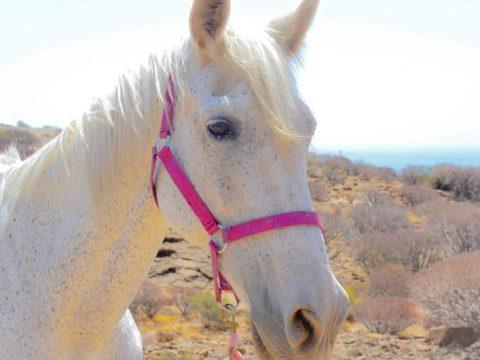 Positive reinforcement training rescue horses