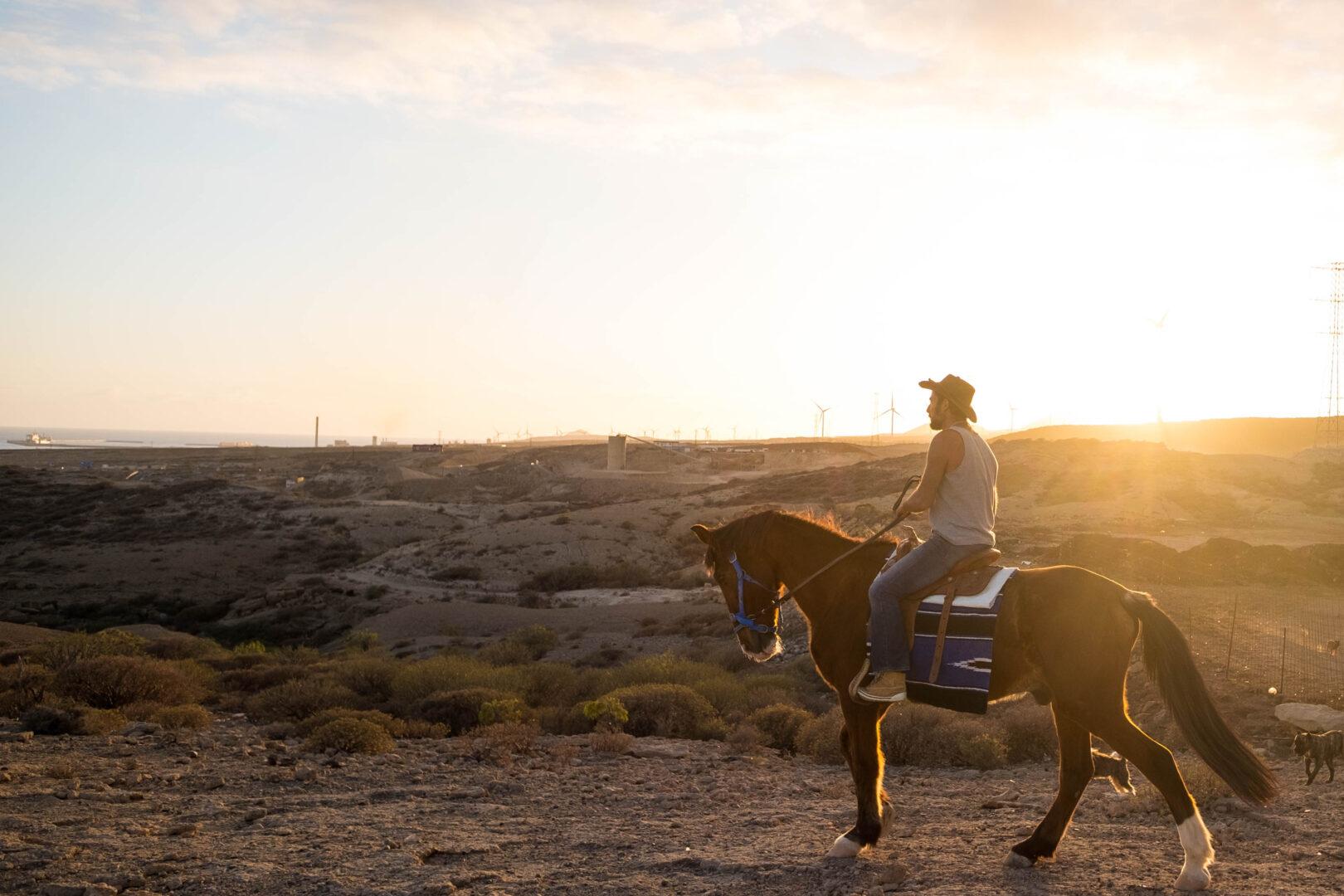 sunset riding Horse sanctuary