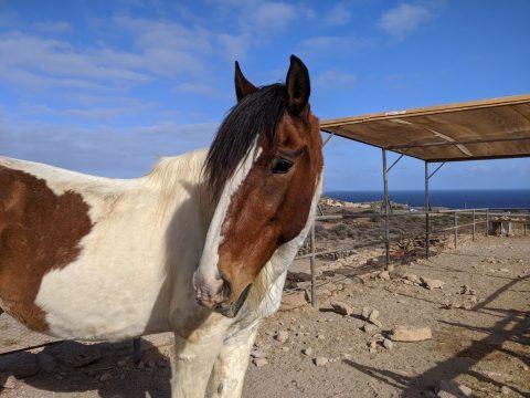 horse in paddock near sea