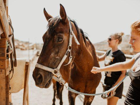 horse sanctuary