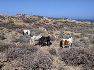happy horses free at pasture