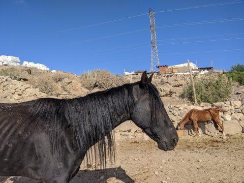 zingaro rescue horse in a paddock