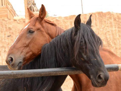 horse cuddle