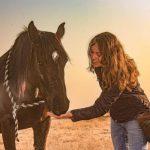 positive horsemanship