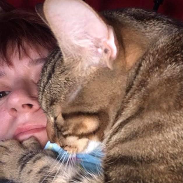 cat cuddling