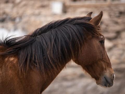 rescue horse