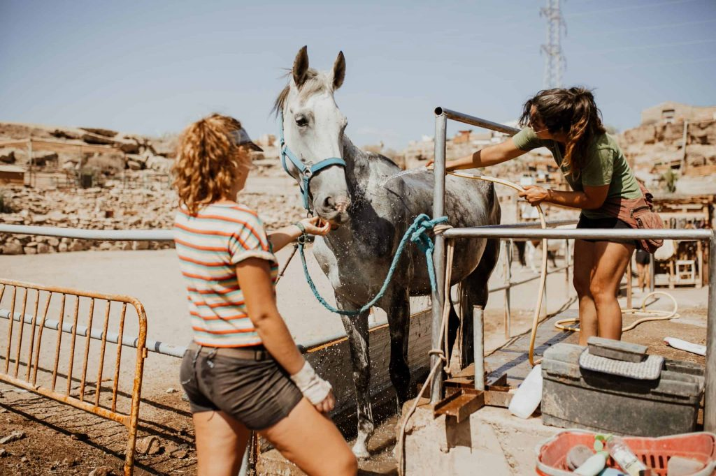 rescue horse in canary islands