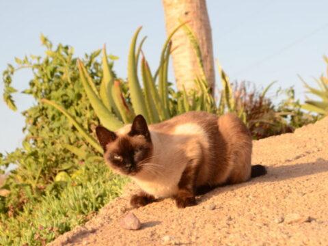 rescue cat in canary islands