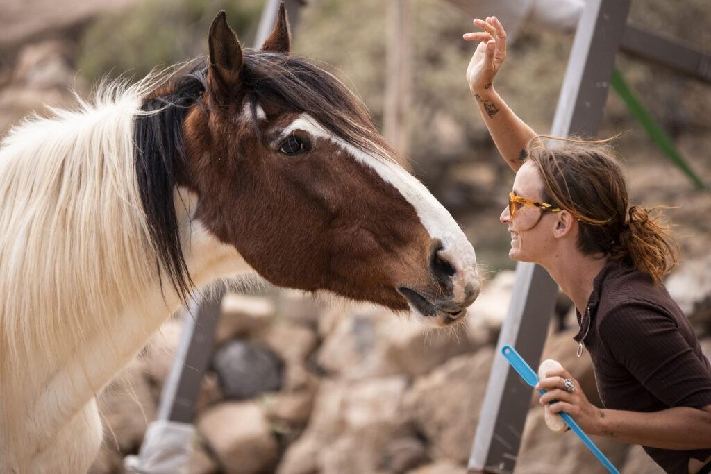 rescue horse riding