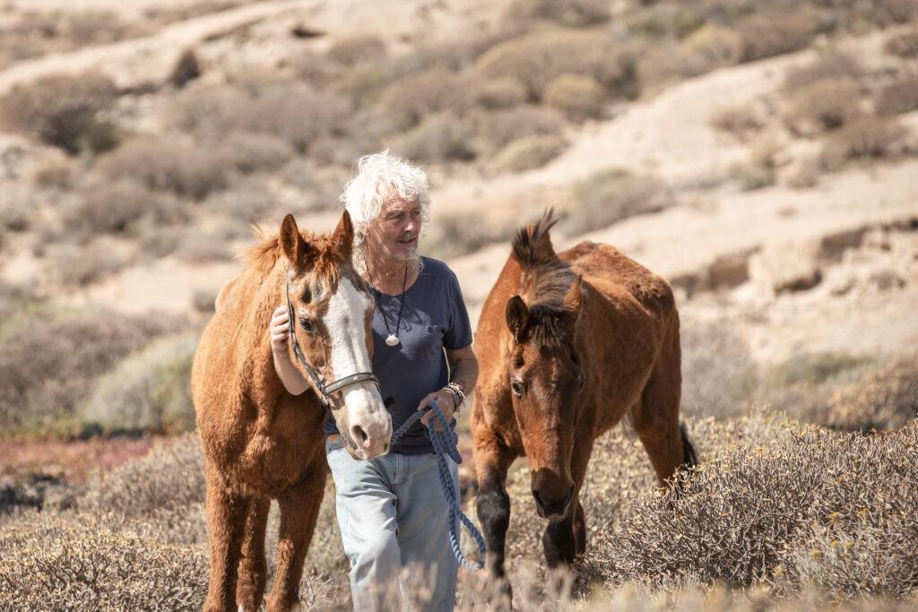 steve travis walks rescue horses