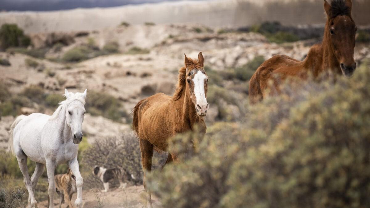rescue horses in a horse sanctuary