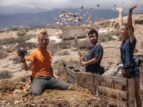 making compost from horse poo
